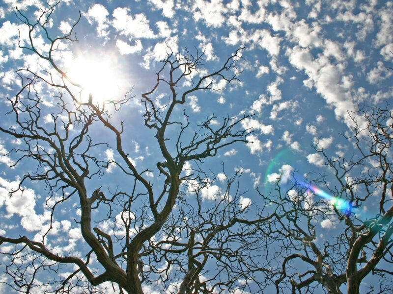 bare tree branches, blue sky and tiny clouds