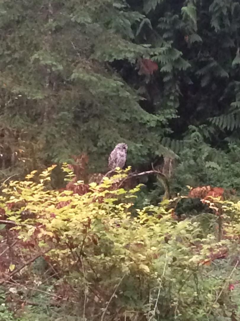 a large bird sitting on a branch surrounded by nature