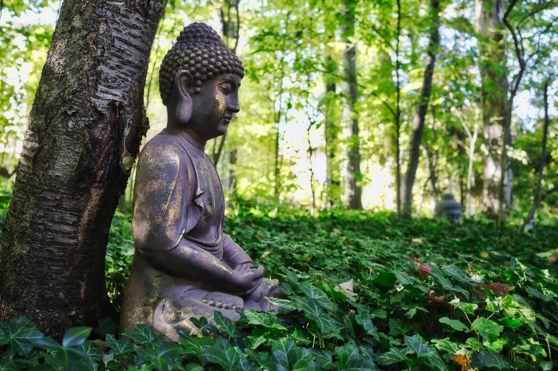 a Buddha in meditation posture sitting under a tree in a field of ivy.