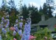 blue flowers depicting Spring